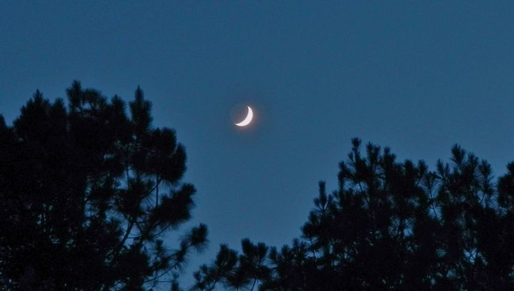 Crescent moon in my back yard Astronomy Blue Crescent Moon Cropped Dark Glowing High High In The Sky Image Of Look Low Angle View Moon Night Night Time Outdoors Peaceful Photo Of Picture Of Scenics Sky Top Tranquil Scene Tranquility Tree Up