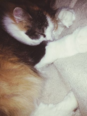 Gizmo ?❤️? Furbaby I Love My Cat Cat Cat♡ Cute Pets Cat Watching Cat Lovers Snuggling Love January 2015