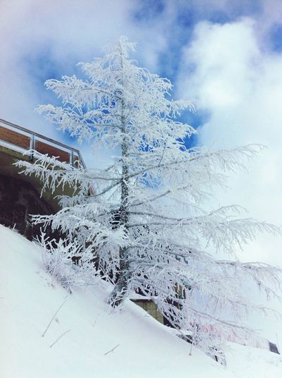 Nature Awesome Snow Frozen Tree White Ice Winter Could  Frost Shades Of Winter