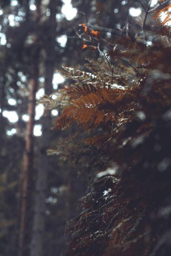 Fern leaves in