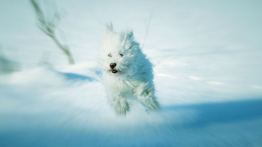 It's Cold Outside Happy Happiness Dog Dog Love Doggy Doggie Doggy Love Running Freedom Cold Winter Wintertime Outdoor Snow ❄ Snow White Outdoors Nature Pet Animal Activity Sweden Europe