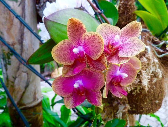 Orchids Orchid House Estepona SPAIN