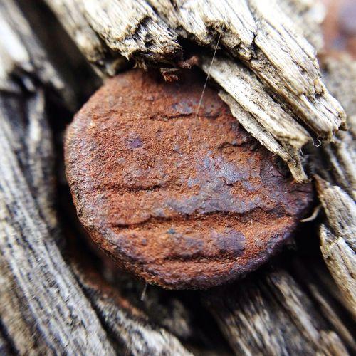 Rusty nail (testing olloclip macro lens) Olloclip Olloclip_macro Macro Macro_collection