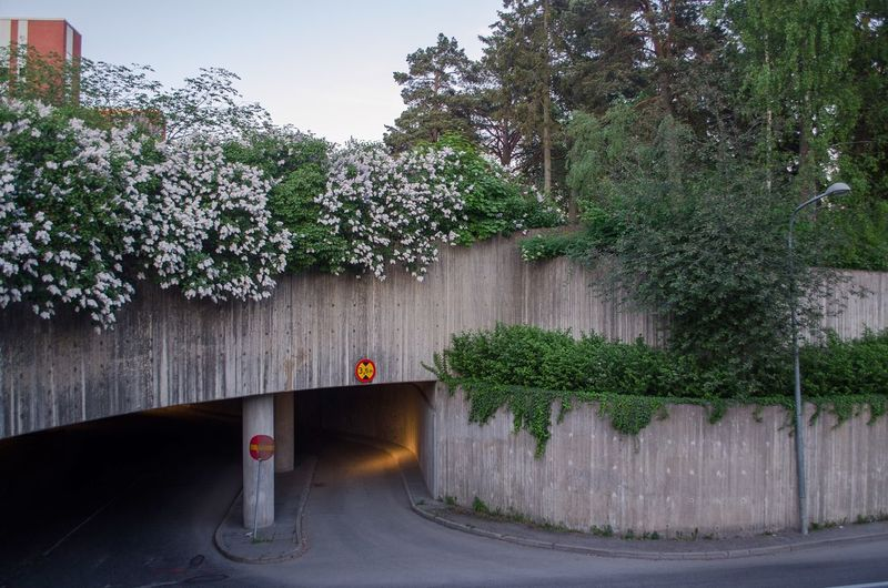 flowers bending over to see the road Stockholm Sweden Plant Tree Architecture Growth Built Structure Nature Transportation Day Outdoors Wall - Building Feature Street Green Color