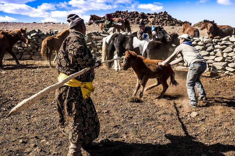 Wild Horse Gobi Gobi Desert Mongolia Animal Animal Themes Animal Wildlife Cavallo Mongolo Cavallo Selvatico Domatore Di Cavalli Mongolian Horse Outdoors Real People Tame Horse Walking