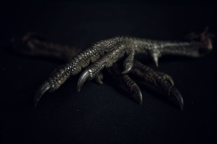 one of two.......02 Avian Bokeh Photography Bokeh Chiaroscuro  Black Color Animal Body Part Close-up Black Background Animal Darkness Texture Claw Scales Pheasant Feet Pheasant Dead Bird Food Voodoo
