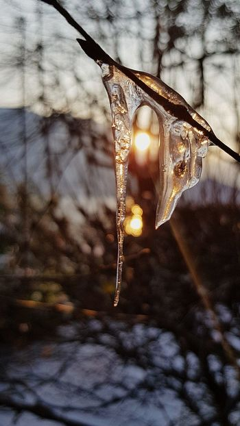 Frozen Morning Samsungphoto S8 Samsungs8 Lucariva Sunrise Inverno Burian Mattino Tree Ghiaccio Freddo Frozenmorning Cold Cold Temperature Close-up Winter No People Weather Ice Hanging Focus On Foreground Frozen Snow Nature Beauty In Nature Outdoors Water Refraction Day