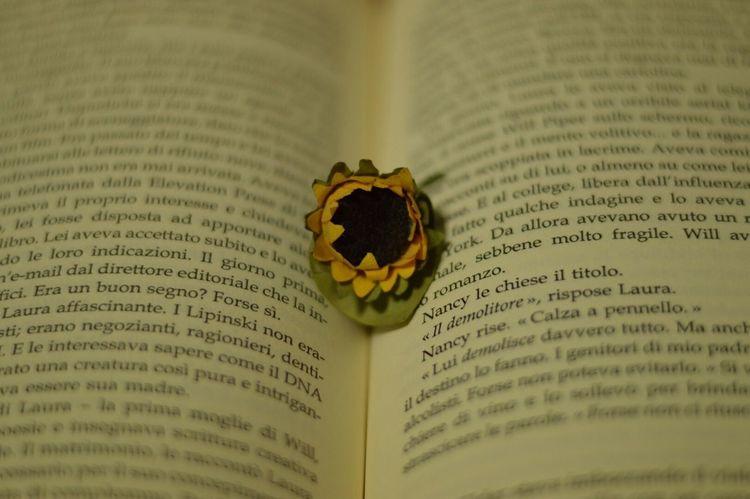 Libro Book Girasole Fiore Lettere Pagine Parole Foglie Esperimento