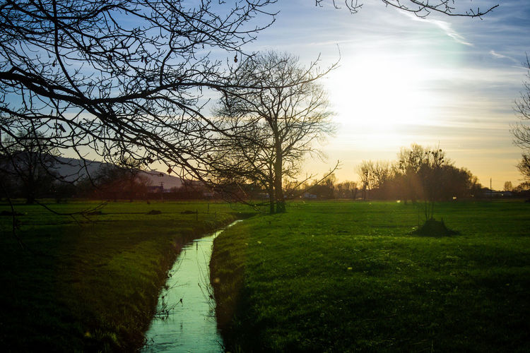 Lauteracher Ried Tree Plant Sky Tranquil Scene Tranquility Grass Scenics - Nature Landscape Nature No People Beauty In Nature Cloud - Sky Environment Bare Tree Field Land Green Color Outdoors Non-urban Scene Sunset Stream - Flowing Water River Sun