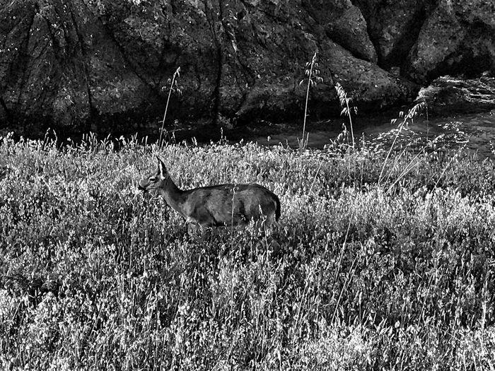 Animals In The Wild Blackandwhite Landscape