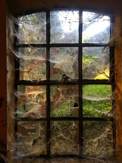 Close-up of window in abandoned building