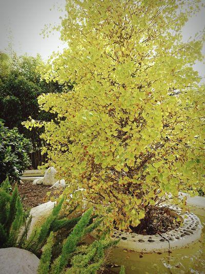 Botanical Autumn Backgrounds Tree Full Frame Close-up Sky Growing