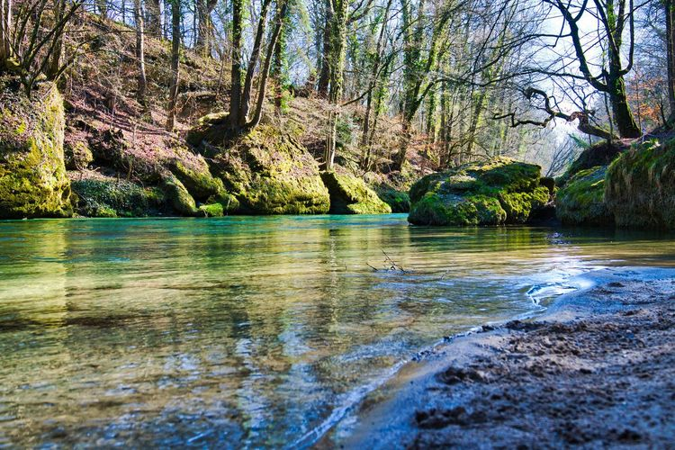 Scenic view of river by trees in forest