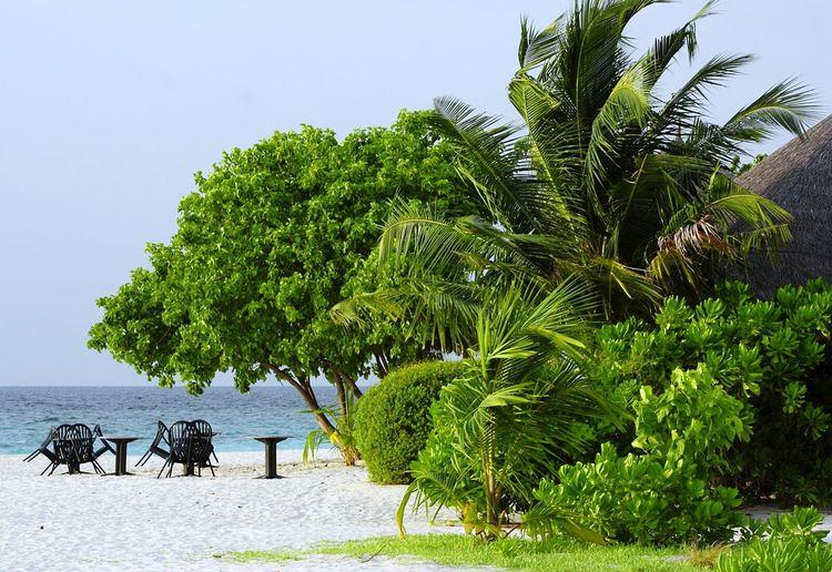 Trees Palm Tree Sea Seaside Beach Green