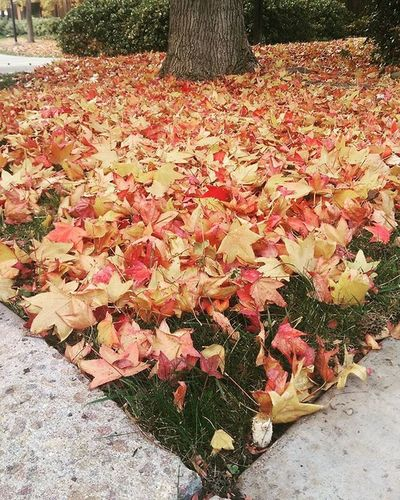 San Diego does have some color. Fall Autumnleaves Greengrassunderthere