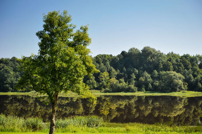 Scenic view of lake against trees in forest against sky