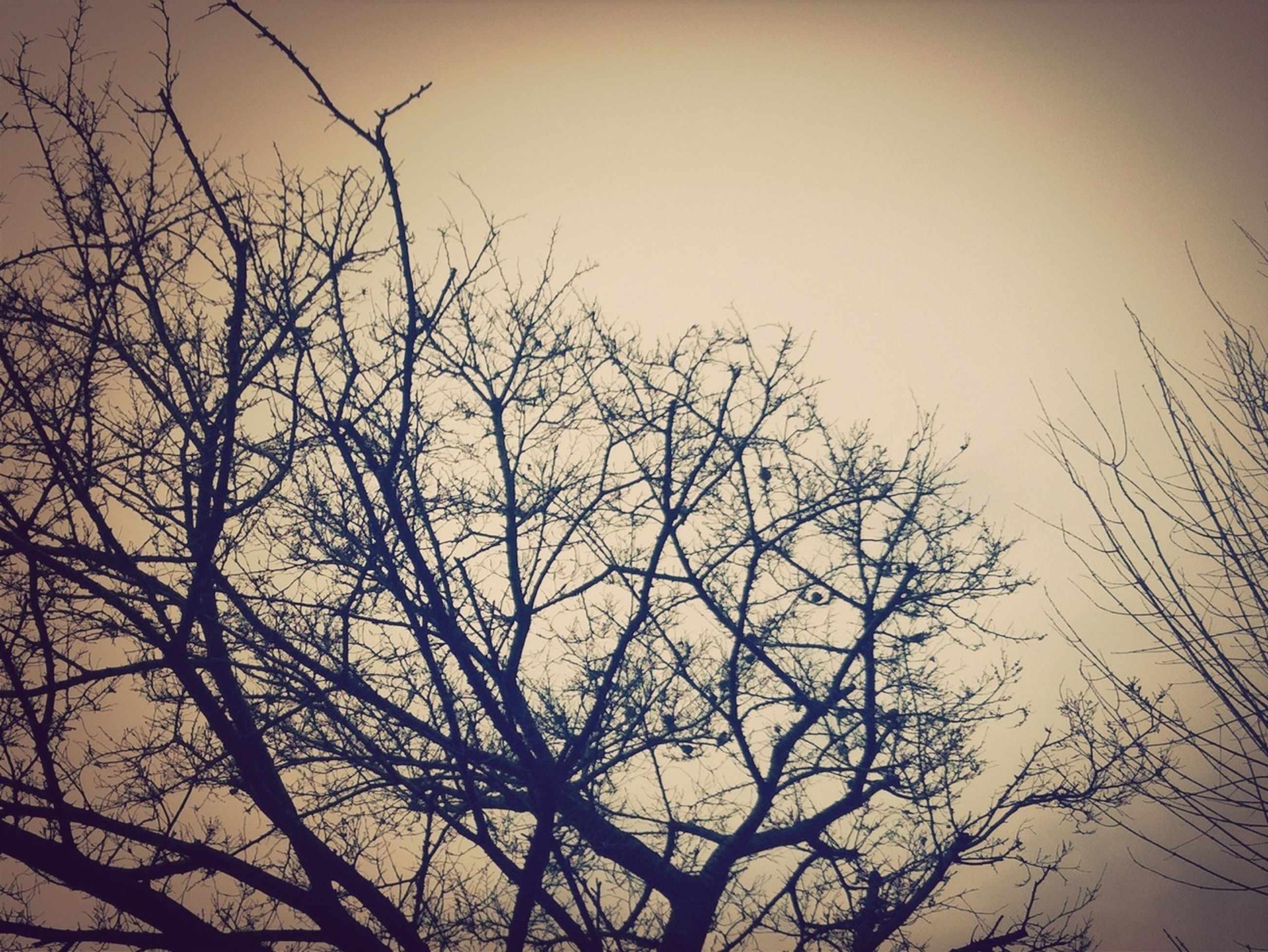 bare tree, branch, low angle view, tree, silhouette, tranquility, clear sky, nature, sky, beauty in nature, scenics, dusk, sunset, tranquil scene, outdoors, growth, no people, copy space, day, high section