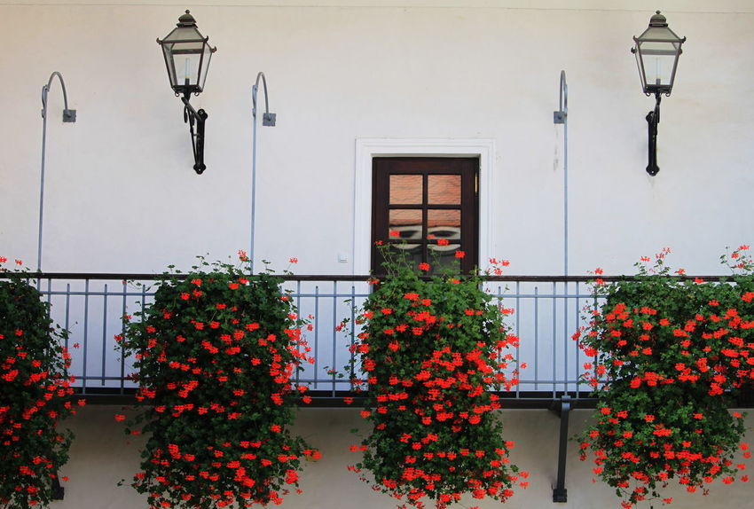 Slovenia Architecture Balcony Building Exterior Built Structure Day Flowering Plant Lighting Equipment No People Outdoors Plant Radovljica Red Color September 2018