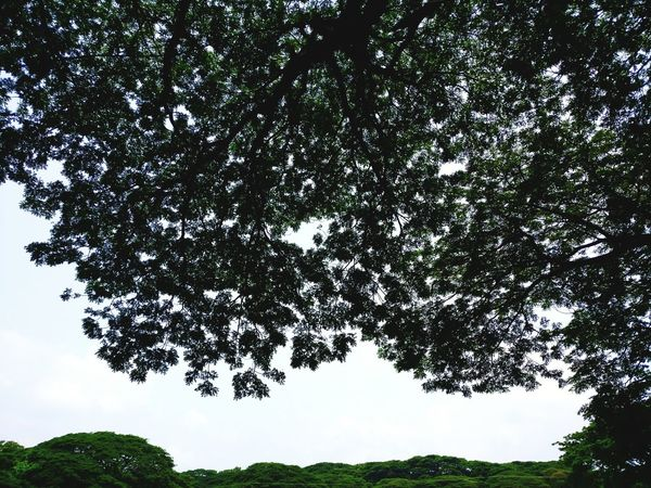 They simply stretch out! Nature Beauty In Nature Freshness Branch Low Angle View Stretching Tree StandingTALL