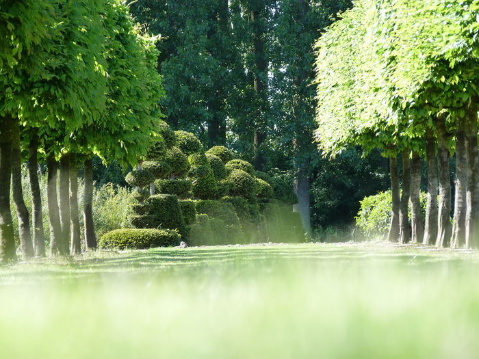 Beauty In Nature Boomkweekerij-joosen Check This Out Grass Green Color Nature Outdoors Topiary