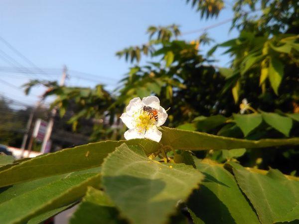 Flower One Animal