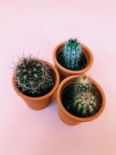 Cacti series Still Life Love Millenial Plant Cactus Succulent Plant Potted Plant No People Indoors  The Still Life Photographer - 2018 EyeEm Awards Thorn Growth Green Color Decoration Nature Sharp Studio Shot High Angle View Flower Pot Barrel Cactus Spiked Beauty In Nature Pot Close-up