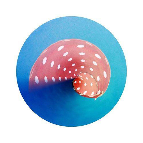 Polka Dot Snail in Auckland Polka Dot Snail