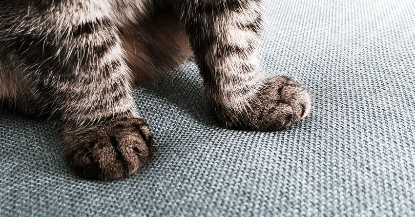 Cat's paw Cat's Paw Paws Cat Low Section Childhood Child Close-up Pets At Home Domestic Cat Textured