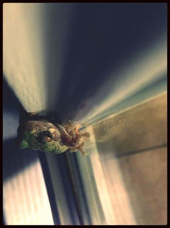 frog that hangs out on my front door every night.