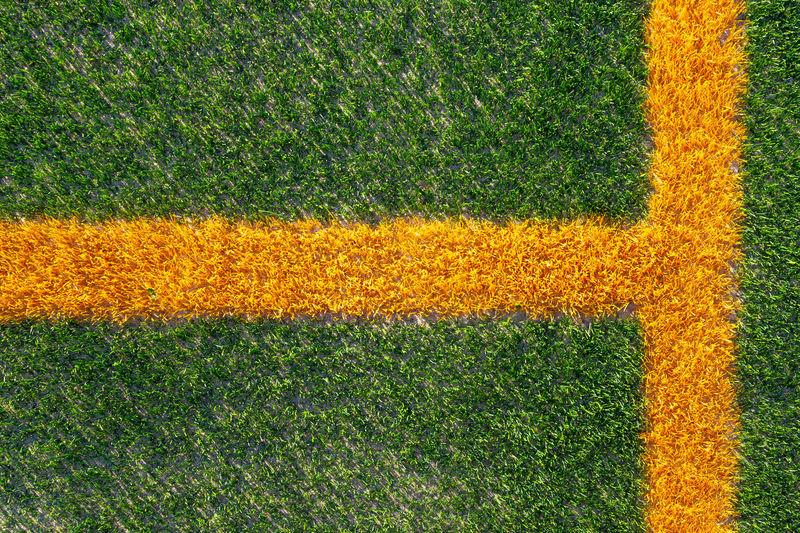 Full frame shot of yellow flower field