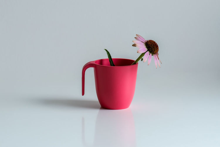 Close-up of red flower in vase against white background