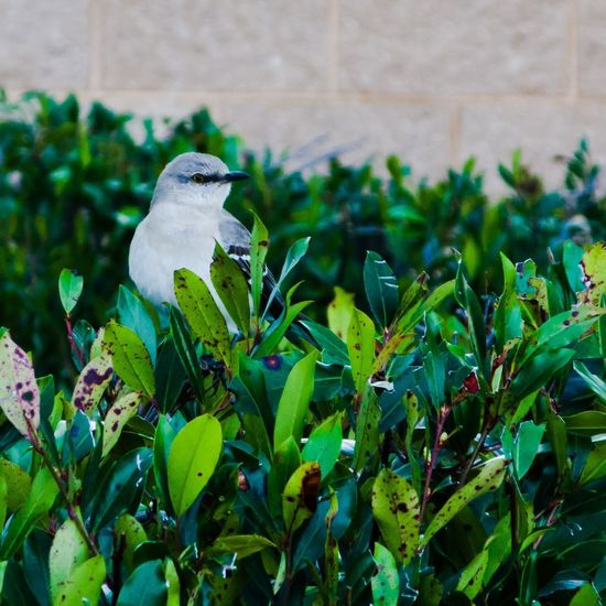 Bird Bird Photography Bird In A Bush Bird On A Bush Green Bush Bush Canon Powershot Powershot G9 Canon Powershot G9 Photoshopexpress