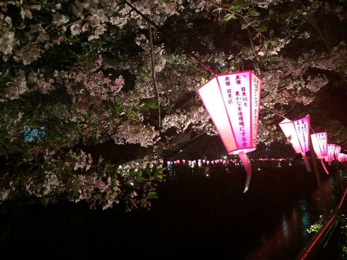 桜綺麗だったー!フィルム現像したら載せる!