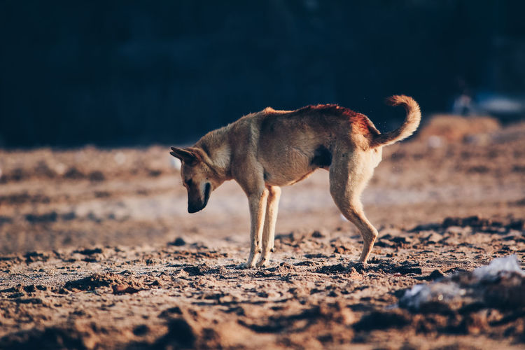 Side view of dog on field