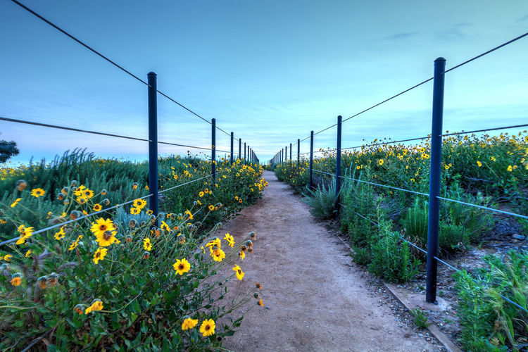 Hiking trail above Dana Point city view at sunset in Southern California, USA Adventure California Daisy Flower Dana Point, Ca Dirt Path Dusk Hiking Trail Journey Nature Orange County, Ca Panorama Panoramic Sunset View Wilderness Wildflowers