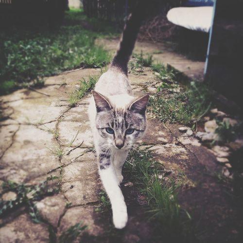 Cat кошка