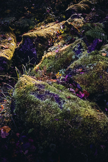 High angle view of plants growing on rocks