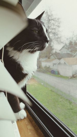 Indoors  Day Cat Cats Of EyeEm Catlovers Cat Life Animal Themes Nice Day Furbaby Window Cat On Window Starring Cute Cat 😻