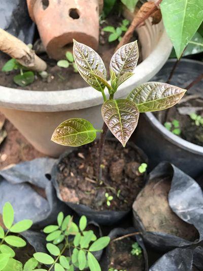 Growth Plant Leaf Potted Plant Nature Plant Part Succulent Plant