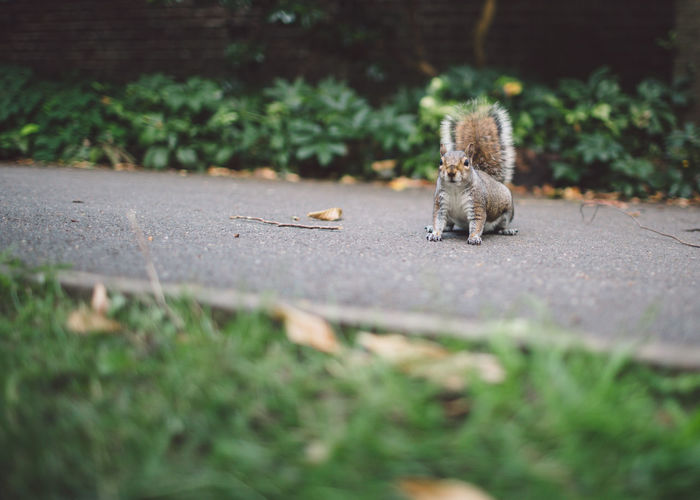 Squirrel on road at park