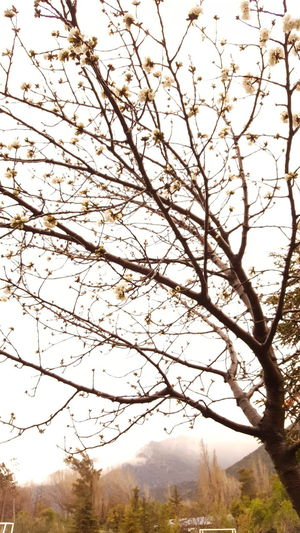 Nature Tree Beauty In Nature Outdoors No People Branch Sky Autumn Growth