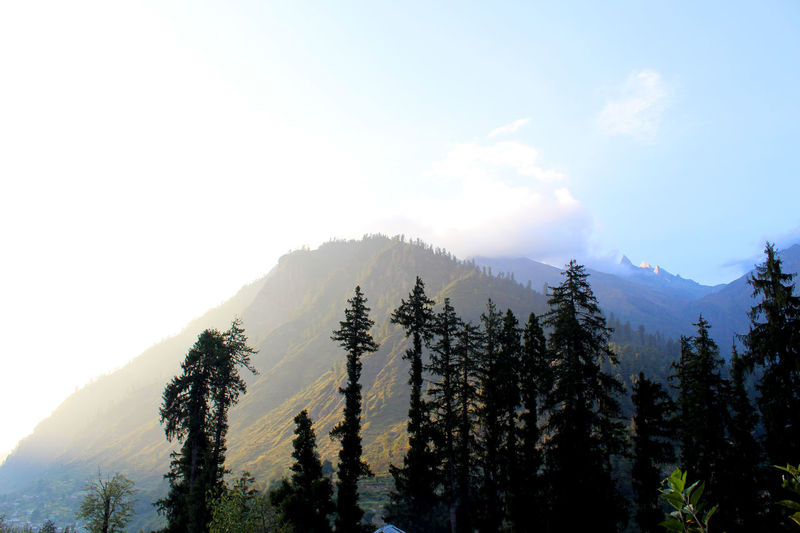 A beautiful view on the to kheerganga trek Kheerganga Kullu Himachal Manali Himalayas Sun Sunrise #trekking #travelling #sightseeing #friends #beautynature Naturephotography Tree Mountain Nature Forest Pine Tree No People Pinaceae Fog Beauty In Nature Sky Day Outdoors