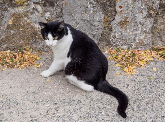 Portrait of black cat sitting on sidewalk