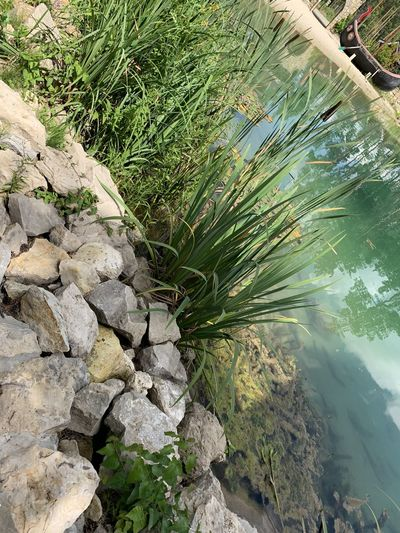 Plant Rock