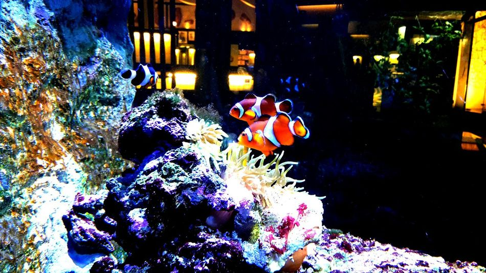 Barcelona, Spain Traveling Cosmocaixa Barcelona Fish Animals Clownfish