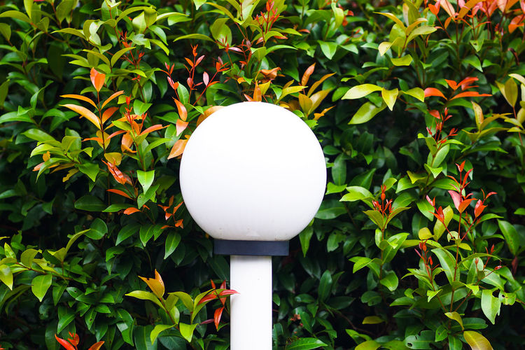 Close-up of electric lamp against plants