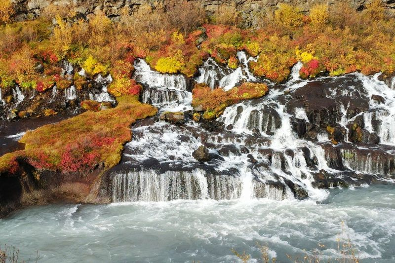 Travel Destinations Iceland Travel In Iceland Fall September Fall Colors Autumn Waterfall Waterfalls Hraunfossar Hraunfossar Waterfall Volcanic Landscape Blue Water Beauty In Nature Power In Nature Water Flowing Water