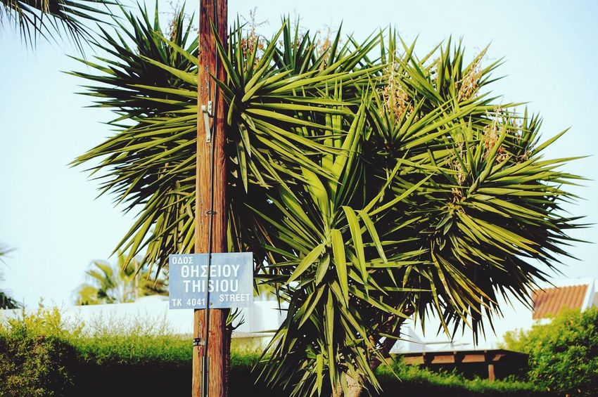 Palm Tree Tree No People Clear Sky Text Streetphotography Street Photography