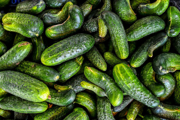fresh green cucumber collection outdoor on market macro Abundance Backgrounds Close-up Cucumber Day Food Food And Drink Freshness Full Frame Green Color Healthy Eating Indoors  Large Group Of Objects No People Vegetable