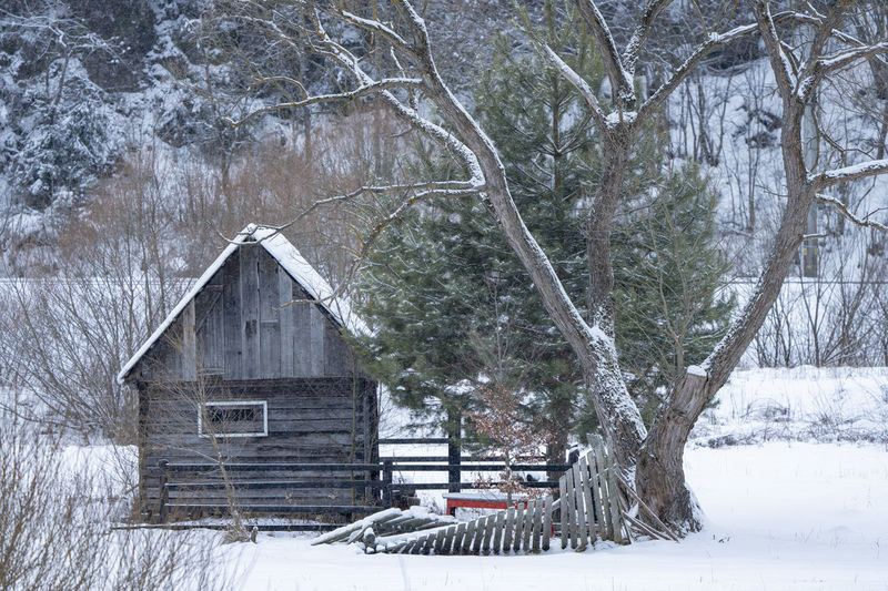 Old house in winter. Winter landscape with wood cotage and big tree. Winter Snow Cold Temperature Built Structure Architecture Nature Building Exterior Wood - Material Scenics - Nature Landscape Beauty In Nature Non-urban Scene No People Land Day Tranquility Bare Tree Snowing Outdoors Extreme Weather Tree Winter Scene
